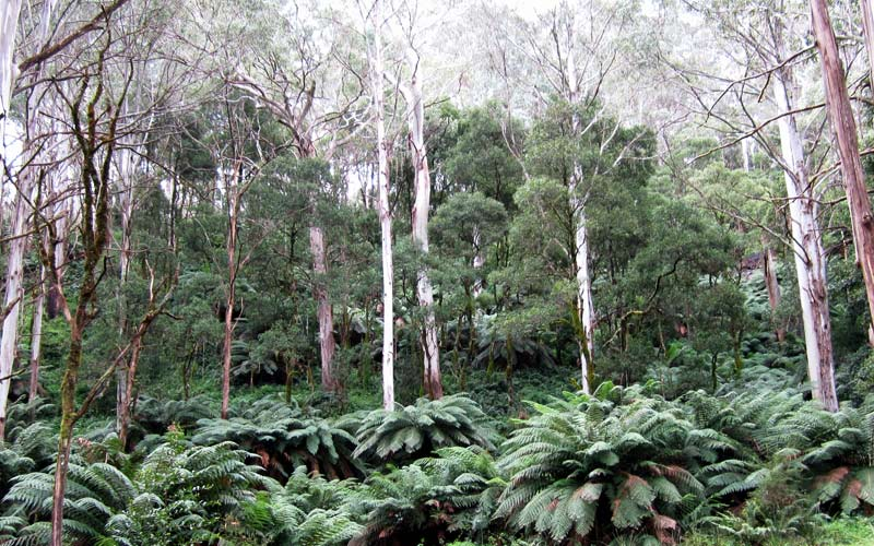 Bushwalkers campaign for preservation of natural areas