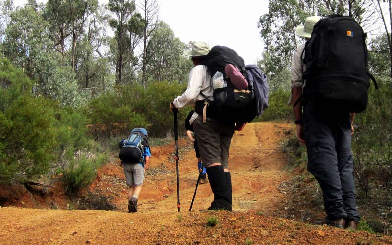 Bushwalkers carrying backpacks