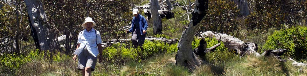bushwalkers on a daywalk