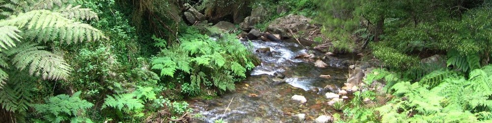 Creek near Jenolan Caves