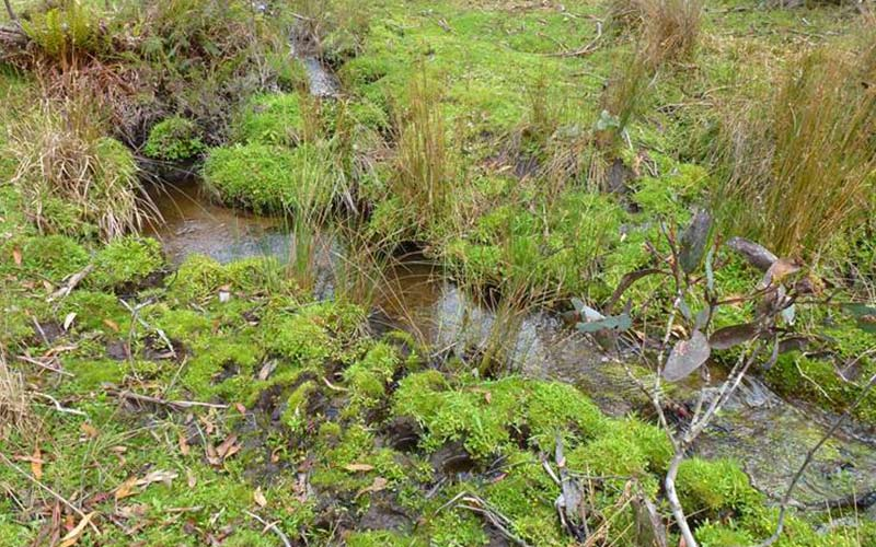 Erosion of the banks of a stream is created by feral horses in the National Park